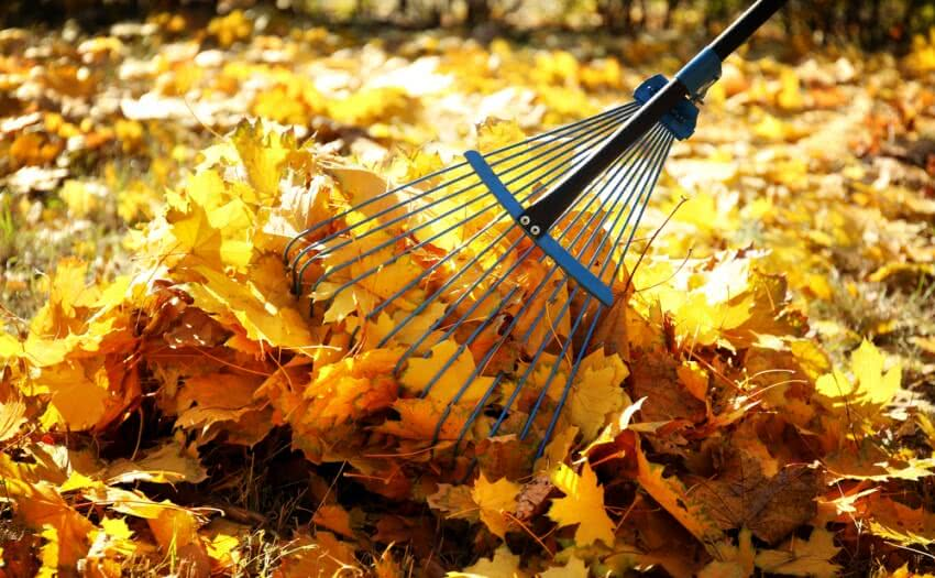 raking leaves, rake, rake meaning