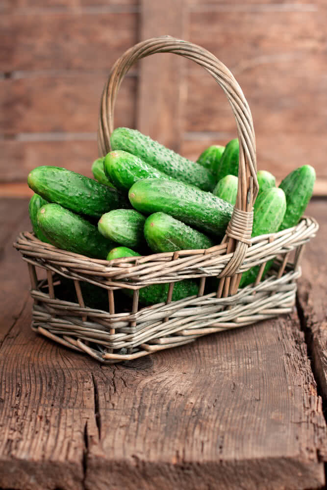 benefits of cucumber, how to grow cucumber at home