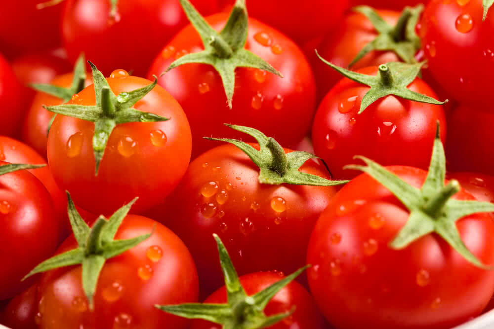 watering tomatoes, water requirement