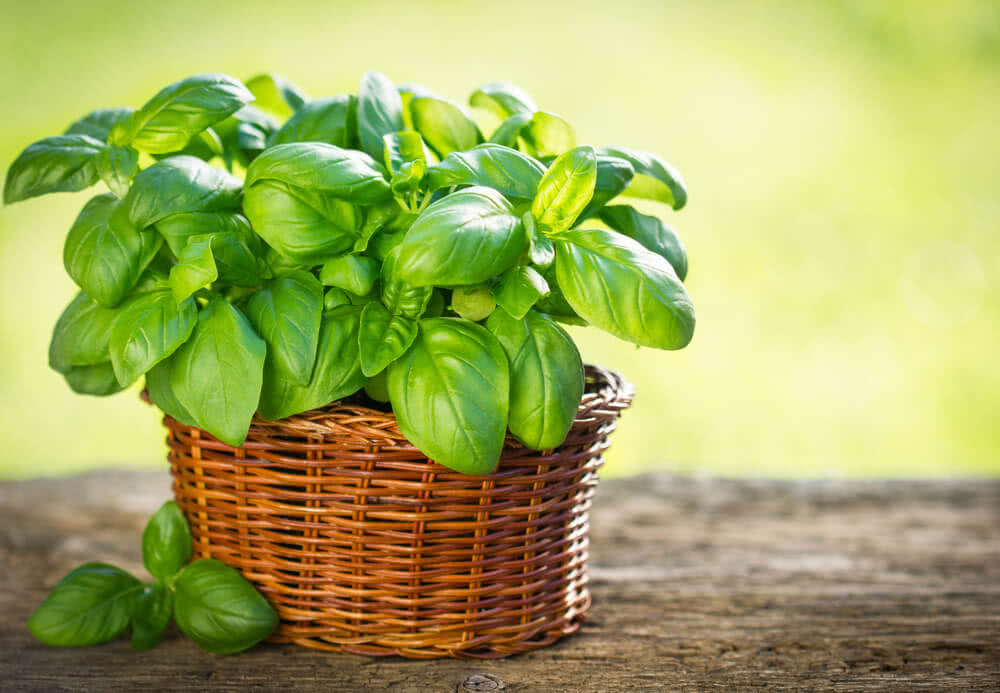 plants for balcony in india, best plants for balcony