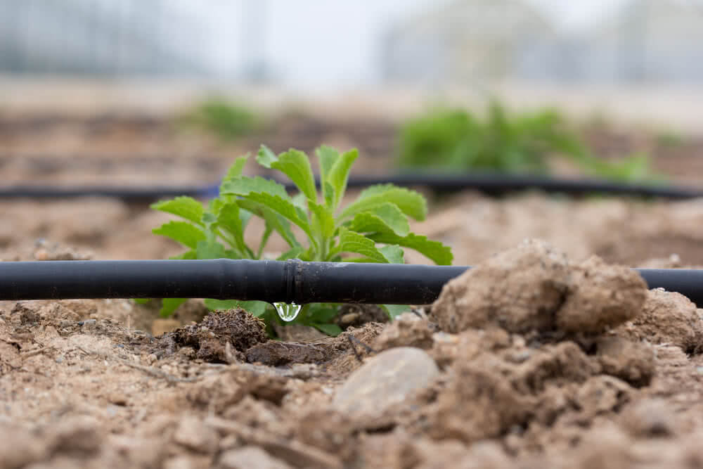 drip system of irrigation