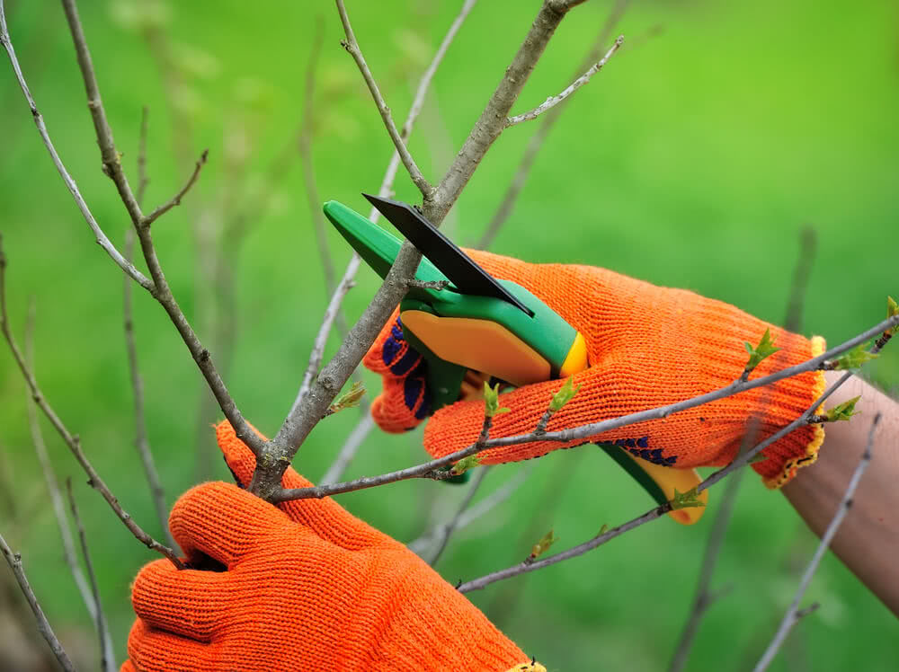 pruning tips for gardening