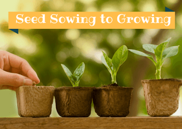 Seed sowing guide