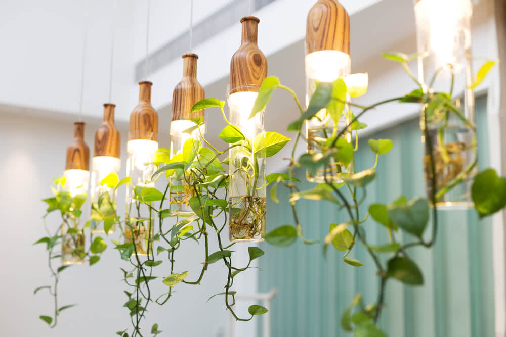 artificial sunlight for plants
