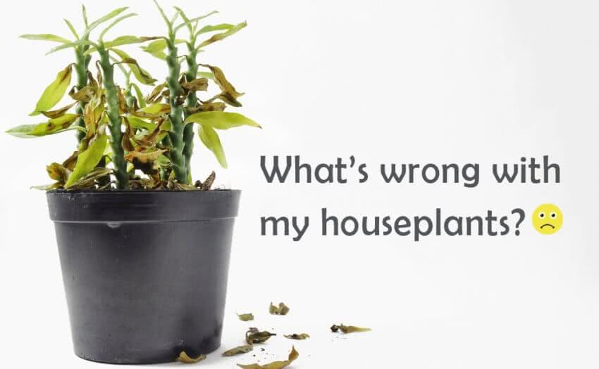 Houseplants diseases and solutions