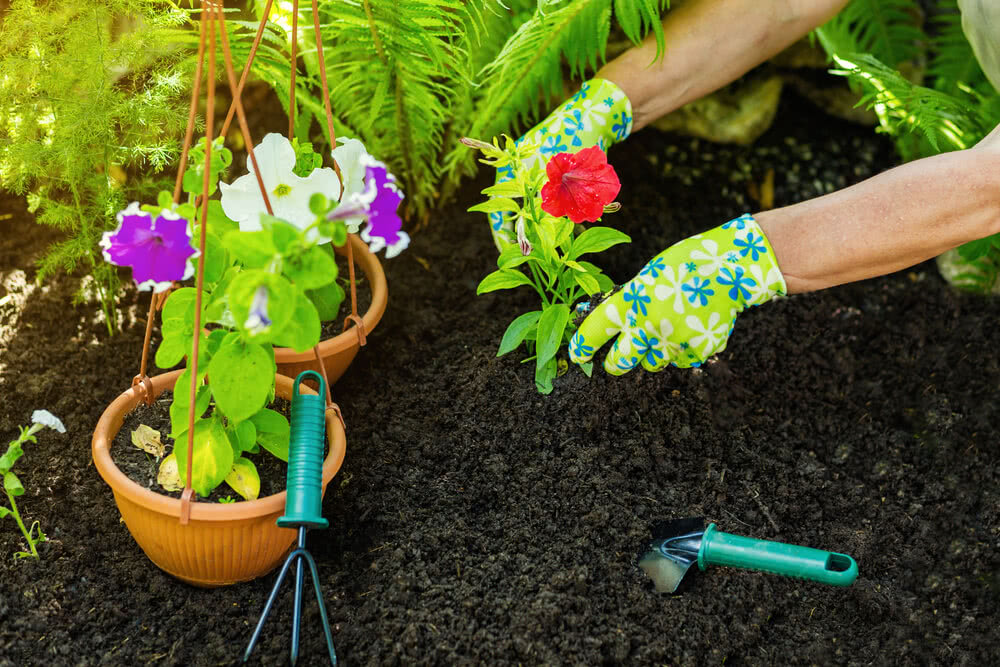 planting flower plant in a garden