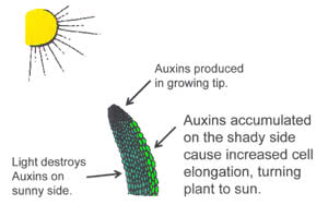 Abscisic Acid Function In Plants