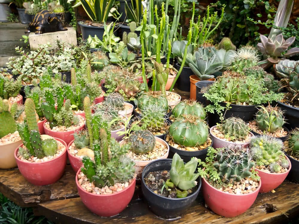 Varieties of succulents in containers