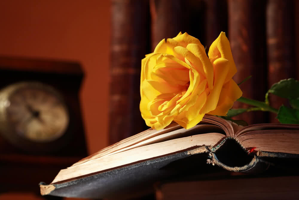 book with yellow rose