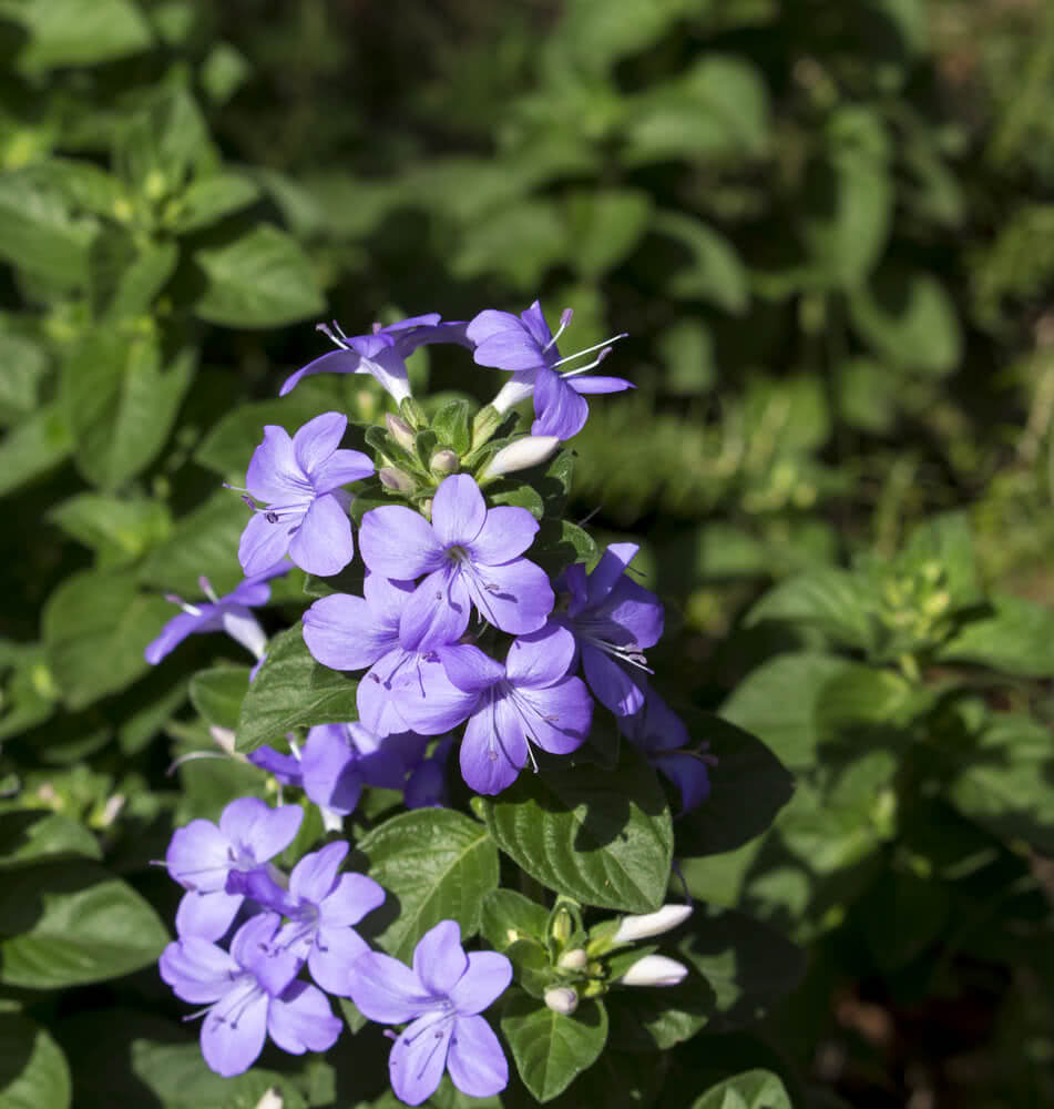 Flowering Plants For Shade Shade Flowers Best Flowers