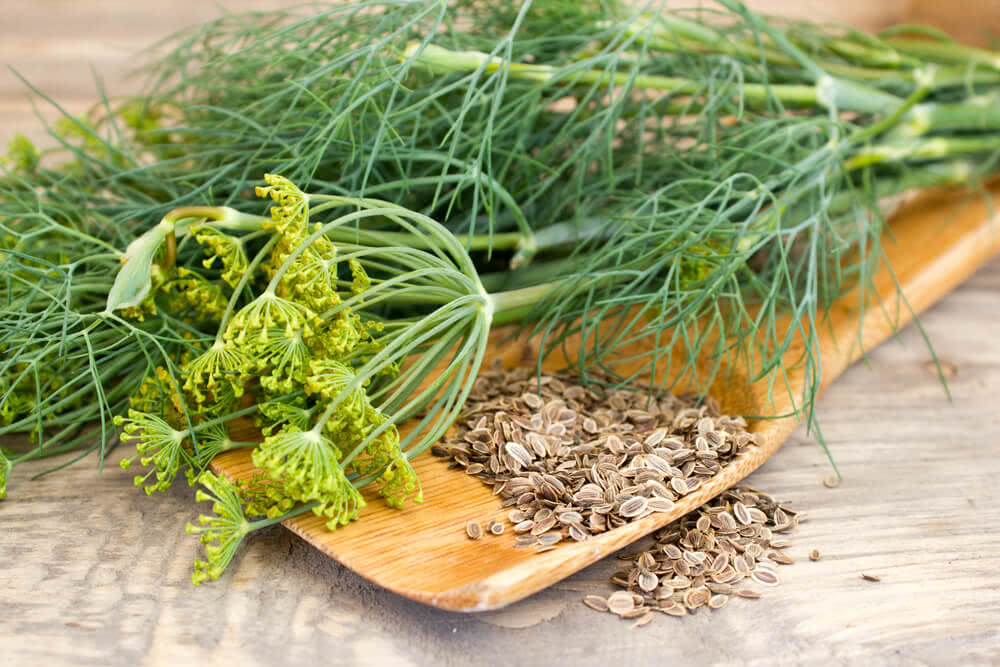 dill leaves & dill seeds