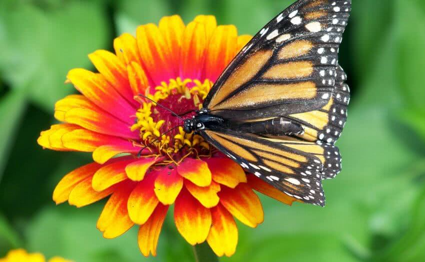 How to create butterfly garden