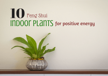 feng shui plants for home