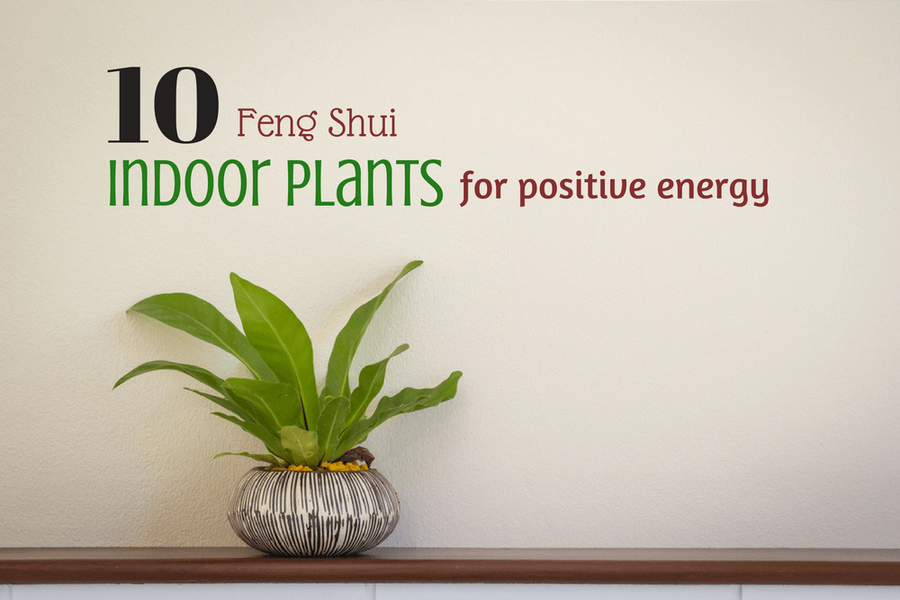 10 feng shui positive energy indoor plants lucky plants for home. Black Bedroom Furniture Sets. Home Design Ideas