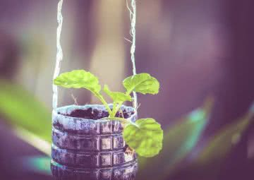 how to grow plants in plastic bottles