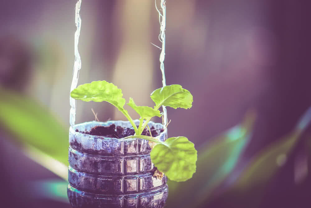 how to grow plants in glass bottles