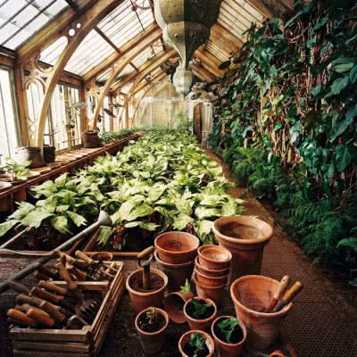 The Most Magical Plants From Harry Potter Herbology