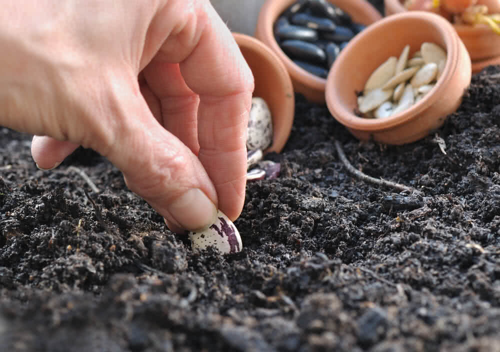 depth of sowing seed