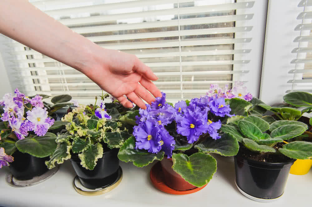 indoor flowering plants