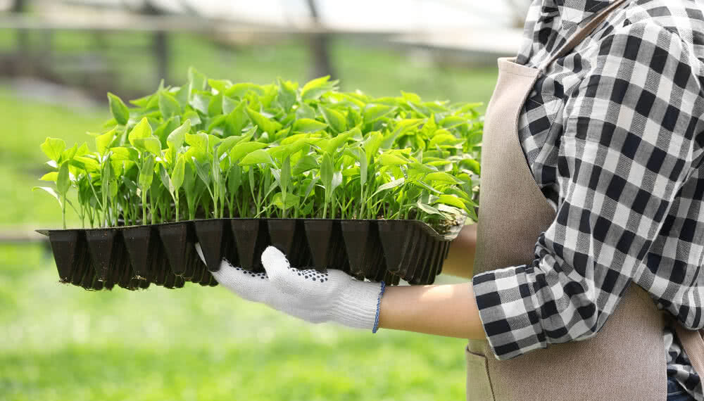 carrying seed sowing trays