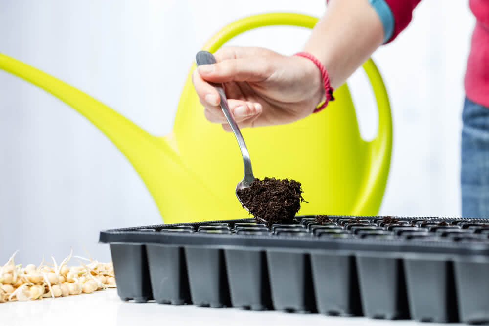 Seed sowing in seed tray