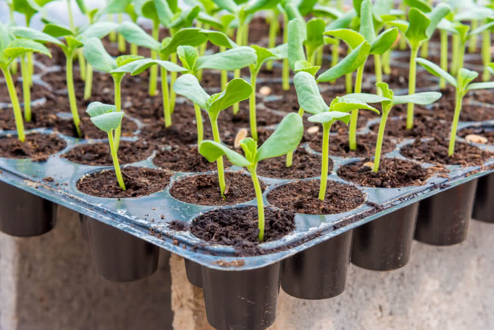 plant growing trays
