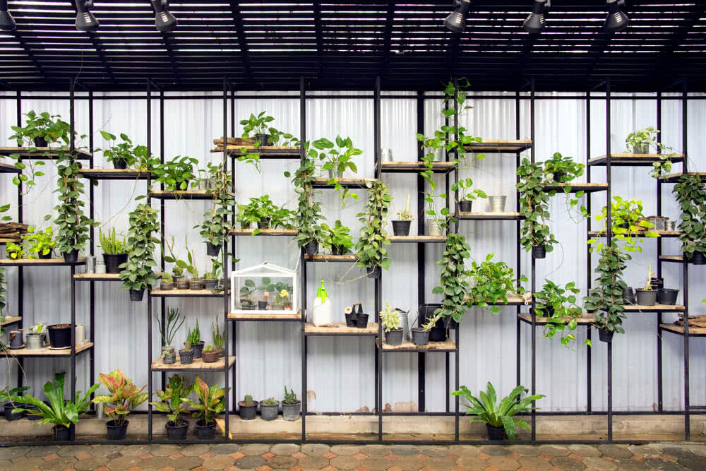 vegetables and plants on rack