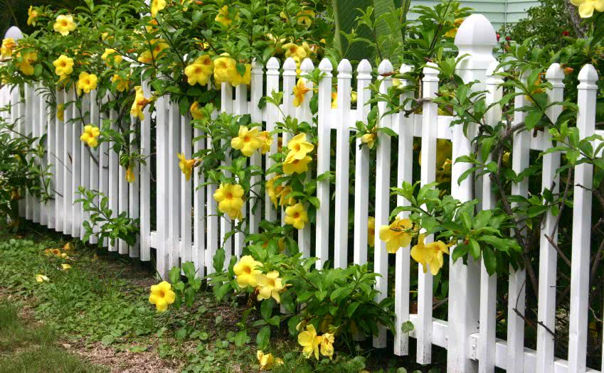 fencing borders for gardens