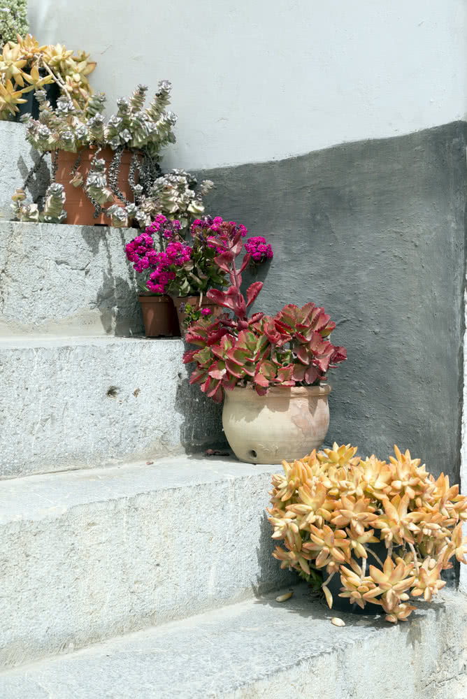 Potted succulents on steps
