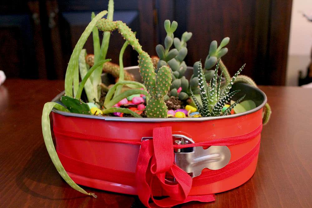 Succulents in red cake mold