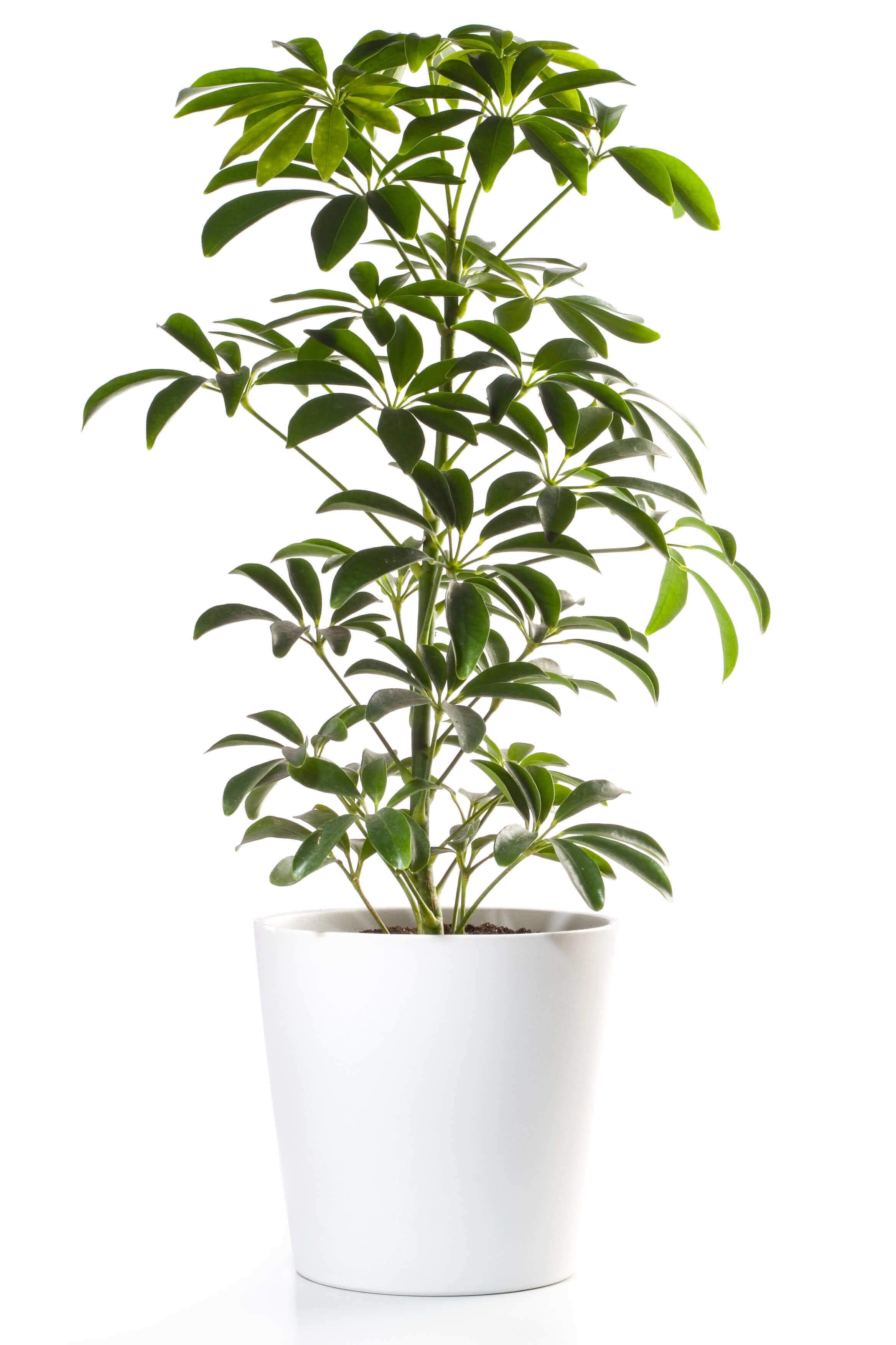 Top 10 low maintenance plants easy care plants desk plants for Low maintenance indoor plants