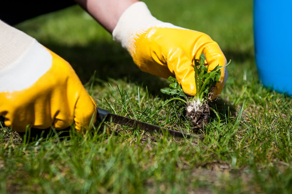 cutting out weeds