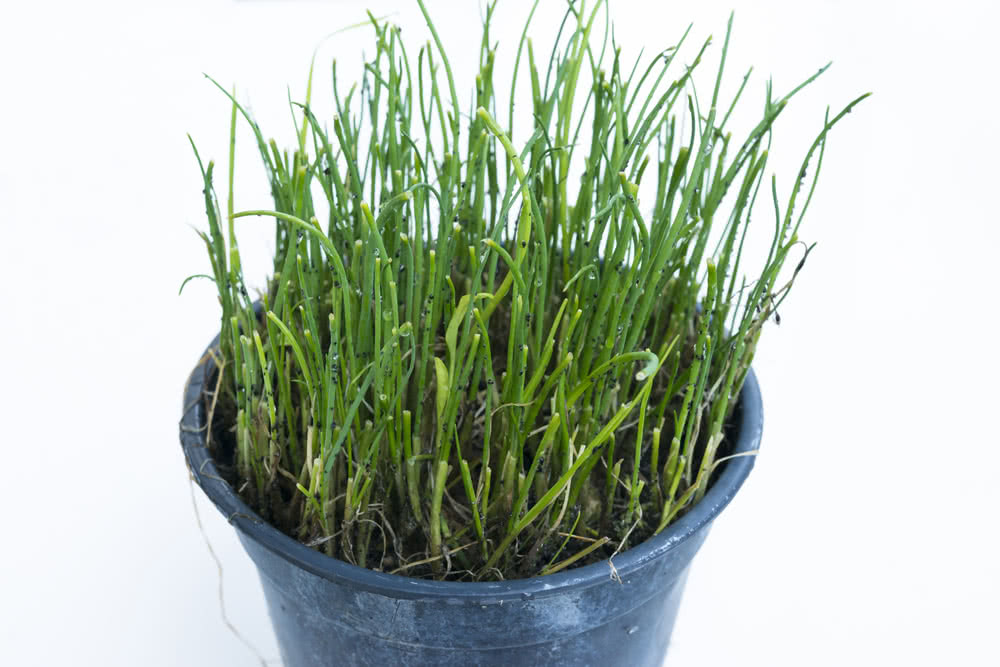 Growing Chives From Seed Growing Herbs Indoors