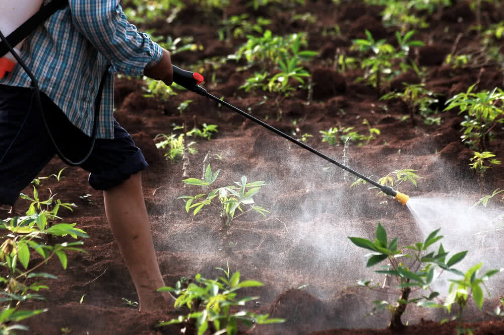 Safety Precautions For Spraying Pesticides on Plants Insecticide For Plants