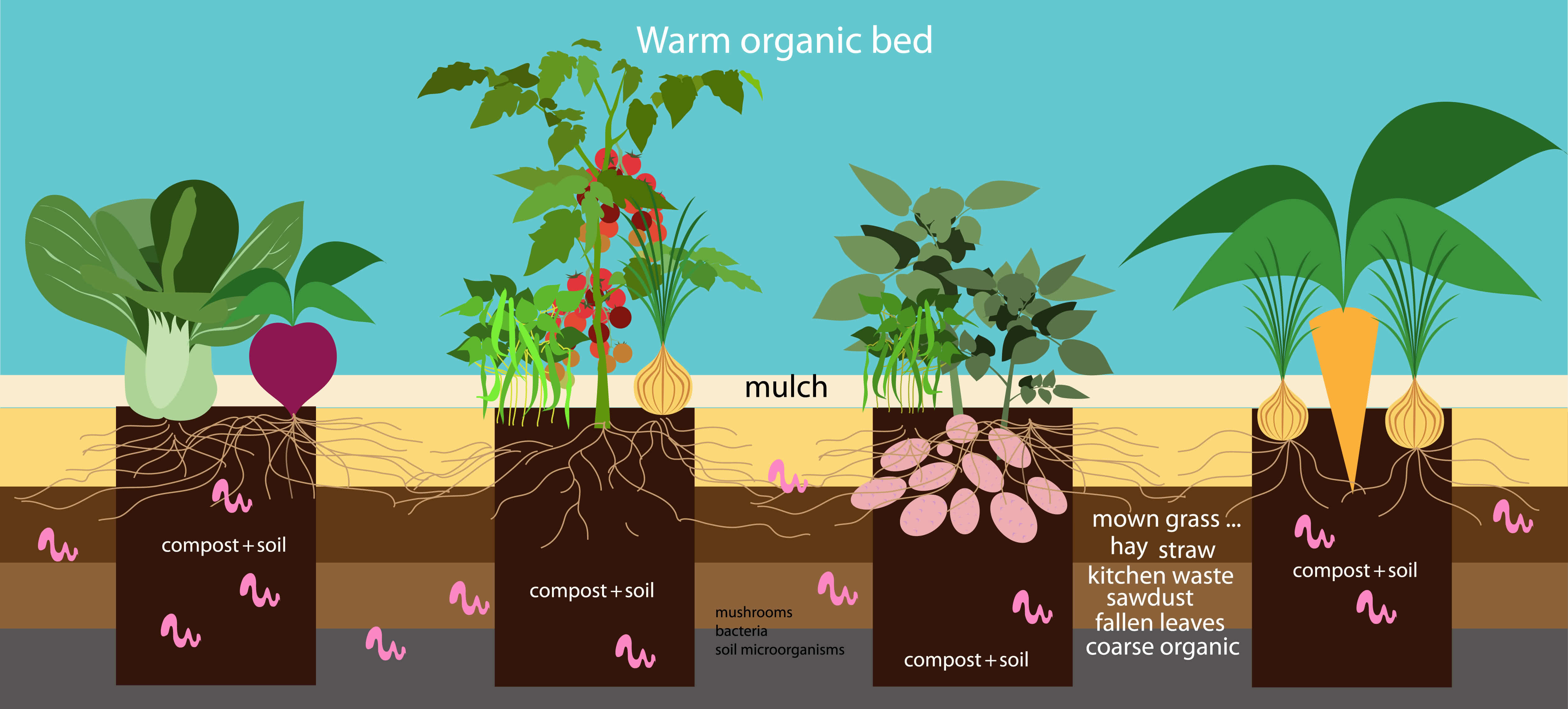 worm composting in vegetables