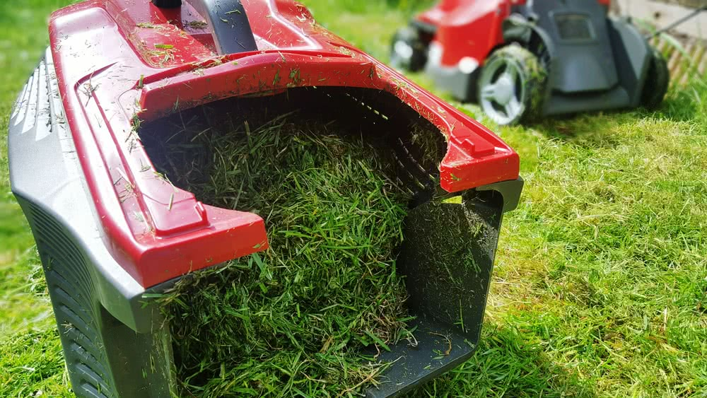 Lawn maintenance: Mowing the Lawn
