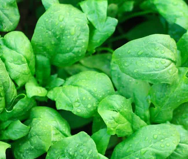 Types of spinach: Space