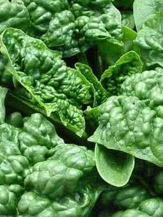 Types of spinach: Bloomsdale