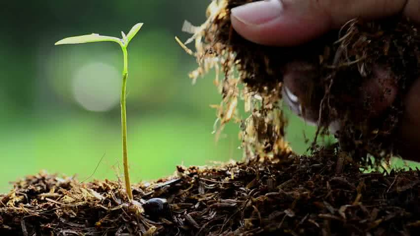 Why Do We Add Manure To Plants Advantages Of Manure