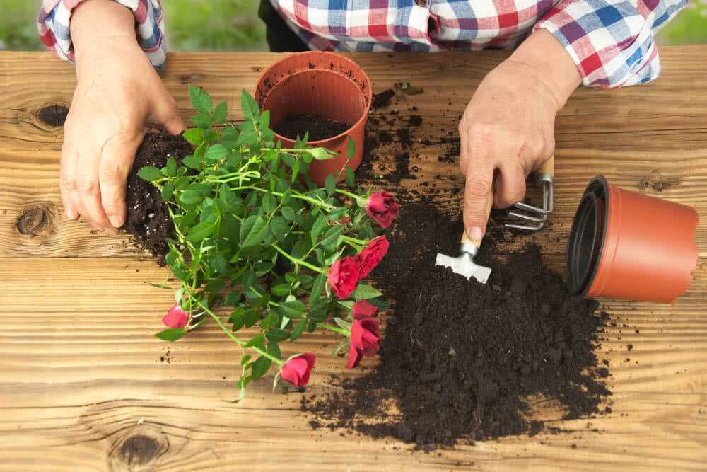 manure for plants