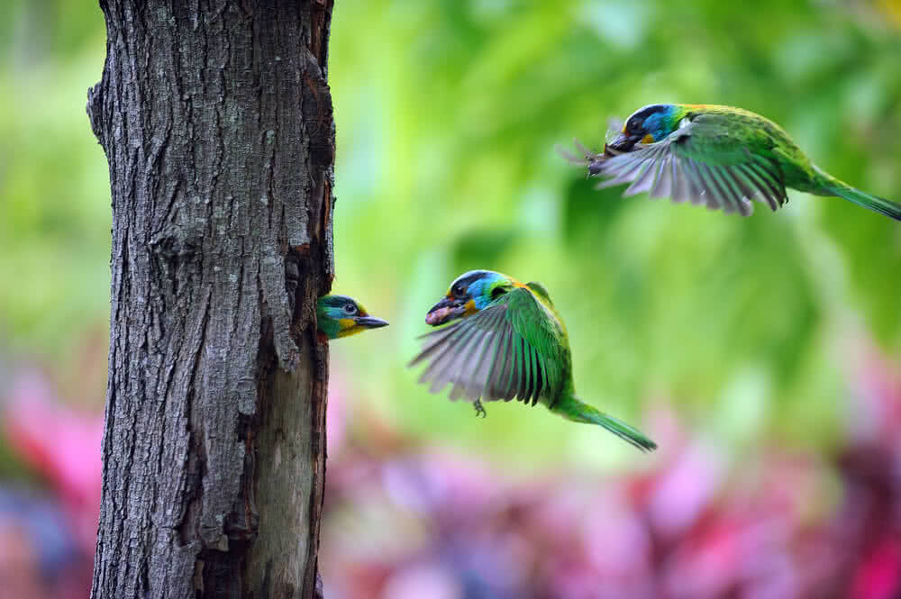 trees that attract hummingbirds