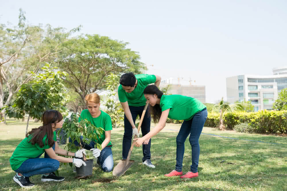 planting trees on world environment day