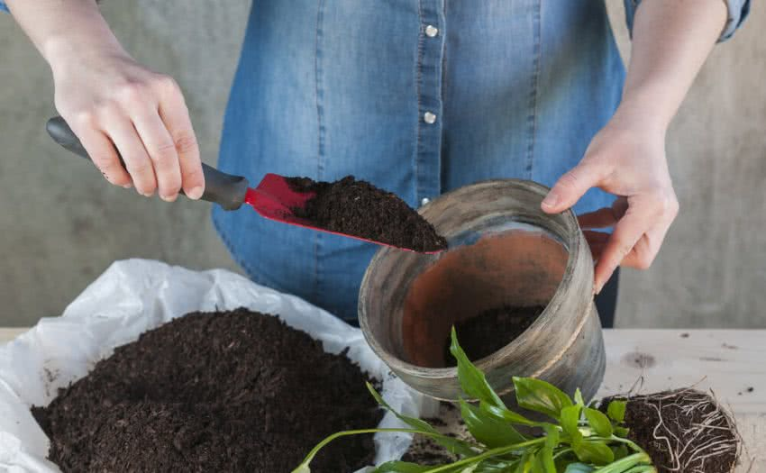 how to transplant a plant