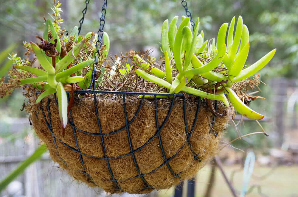 moss for hanging baskets
