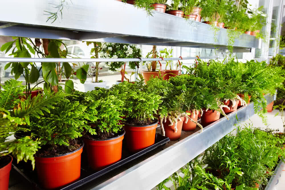 Healthy plants in controlled temperature