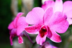 how to create humidity for orchids