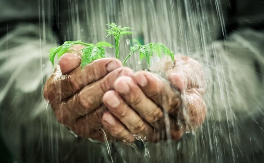 protect plants from heavy rain