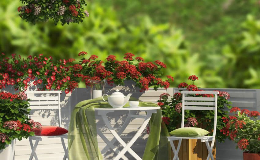 Terrace Gardening In India How To Start A Home Terrace Balcony Garden