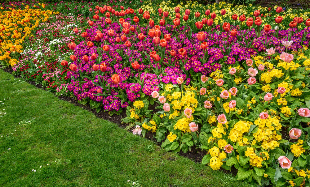garden border of colorful flowers