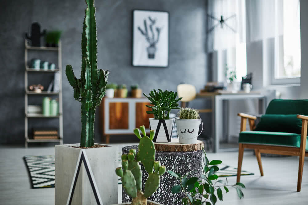 feng shui cactus plants for home
